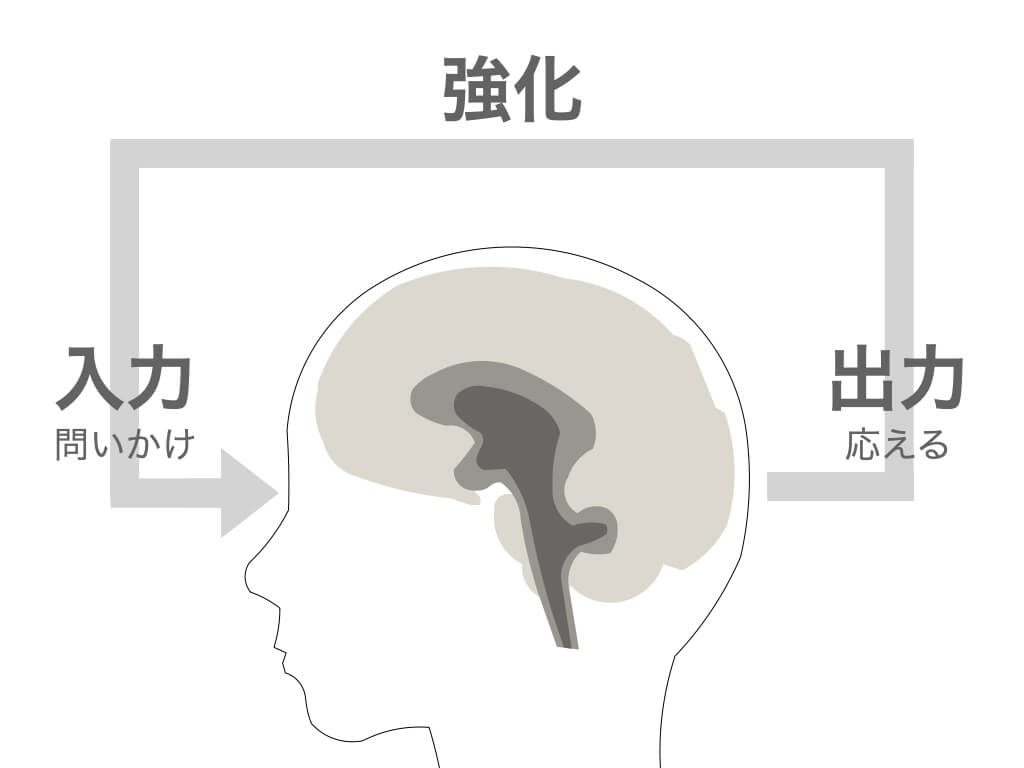脳は入力と出力で強化